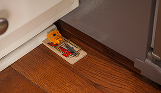 How To Get Rid Of Mice In Your House Apartment Amp Garage