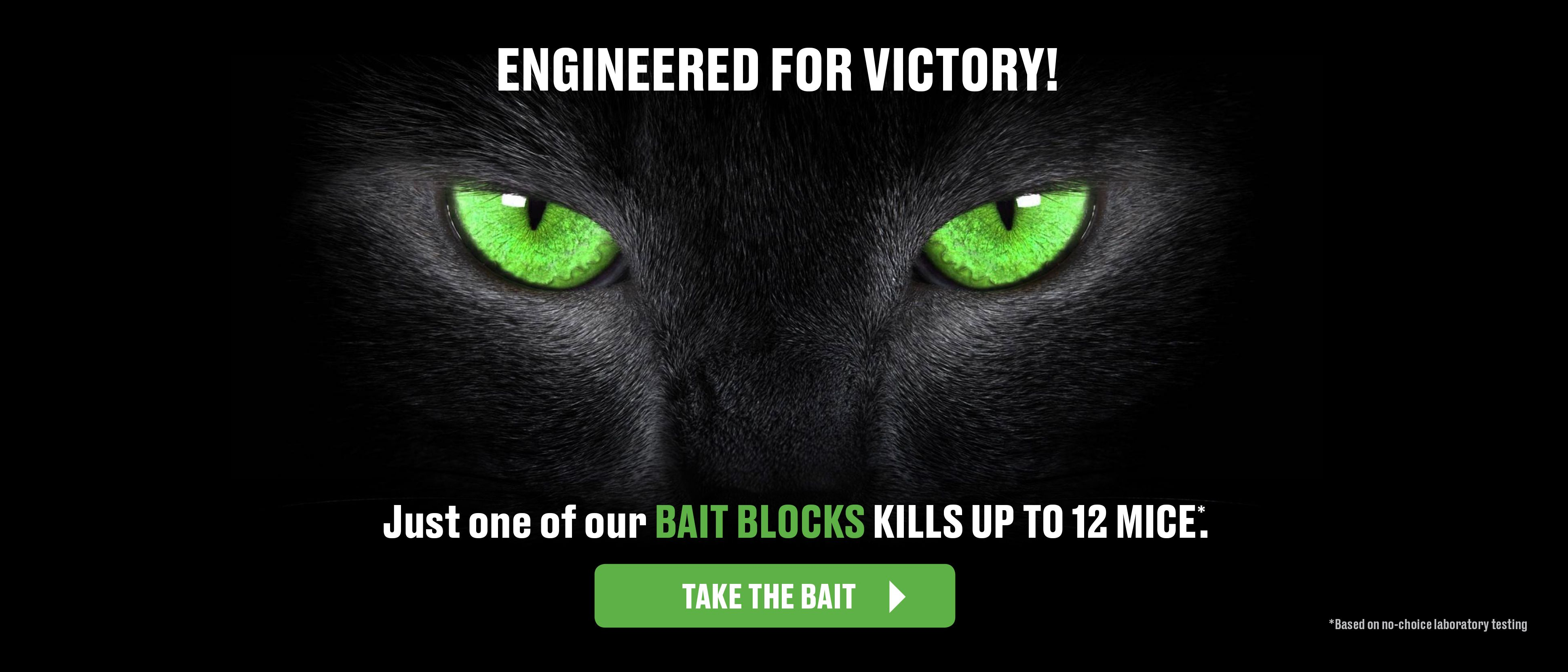 Black Cat with Green Eyes - Caption - Engineered For Victory - Just One of our Bait Blocks Kills Up To 12 Mice Take The Bait