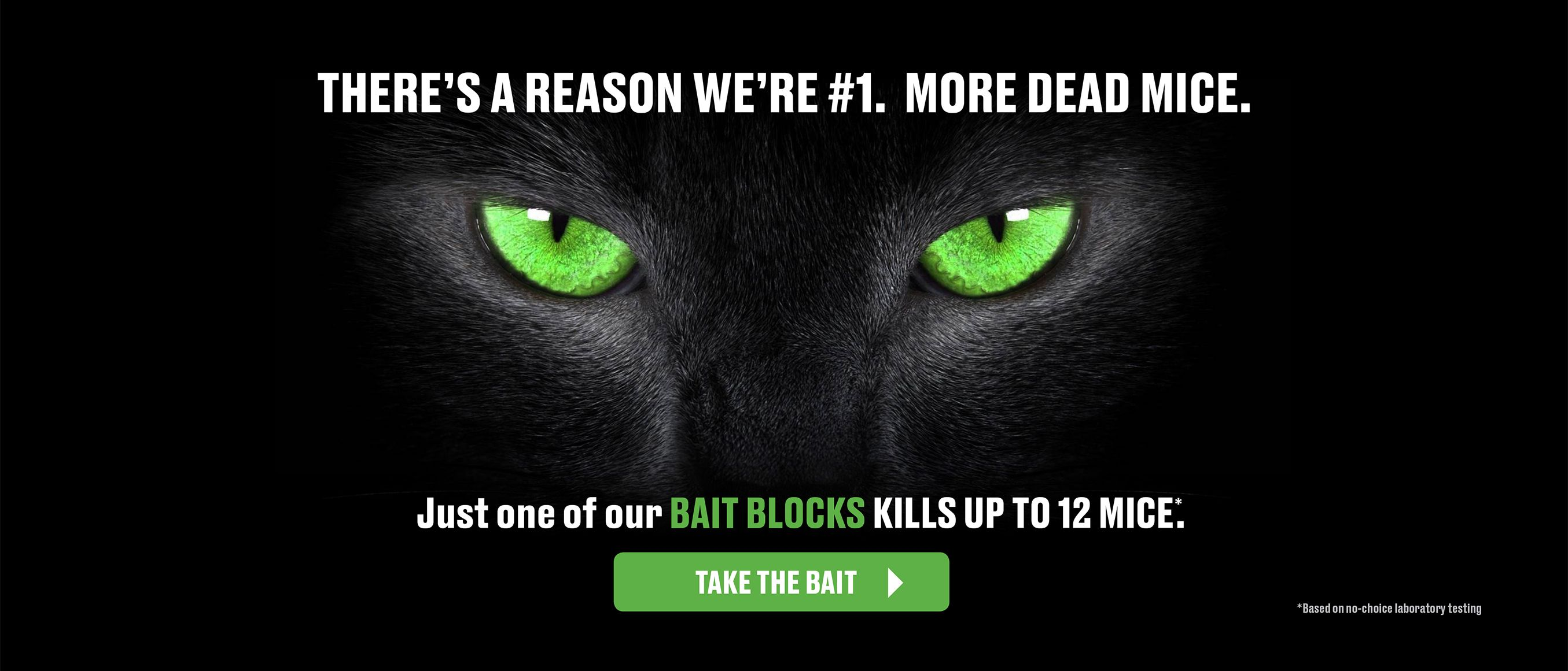 Theres a Reason we're number 1- more dead mice - just one of our bait blocks kills up to 12 mice - learn more