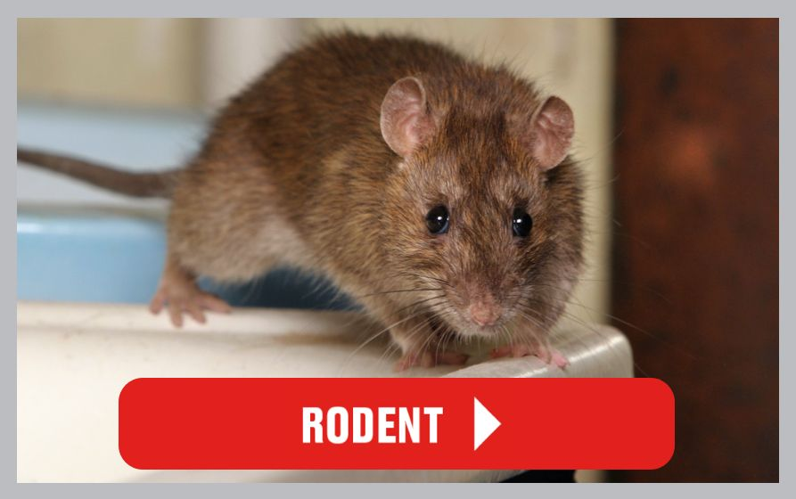 Rodent Control Articles
