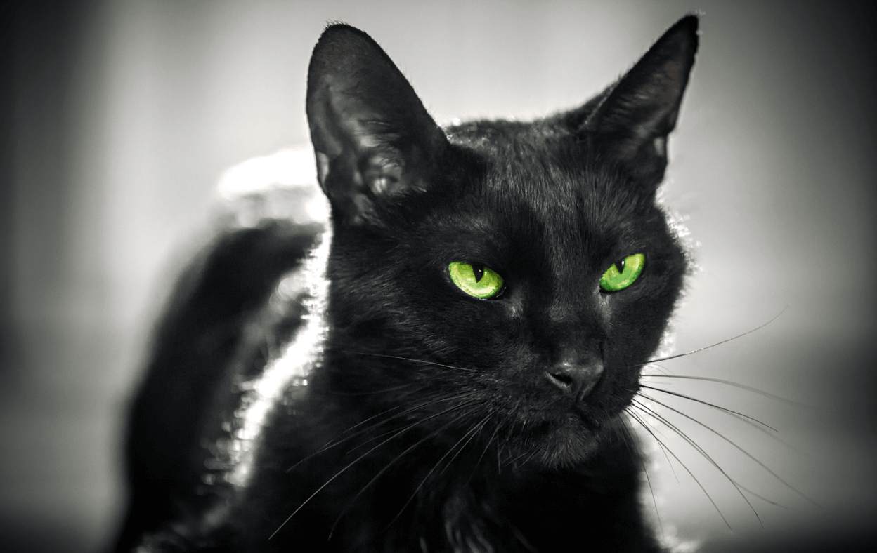 Closeup of black cat's face with piercing green eyes.