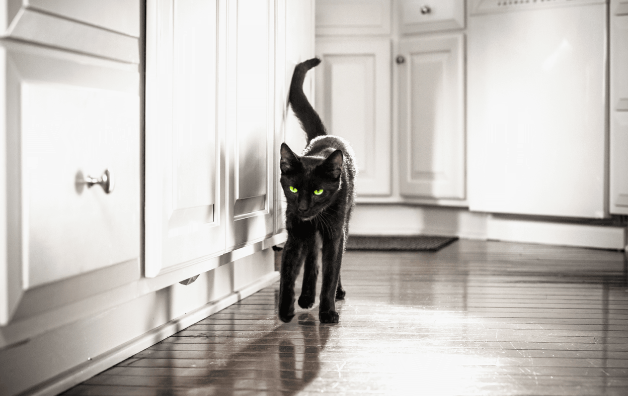 Black cat slinking around kitchen cabines