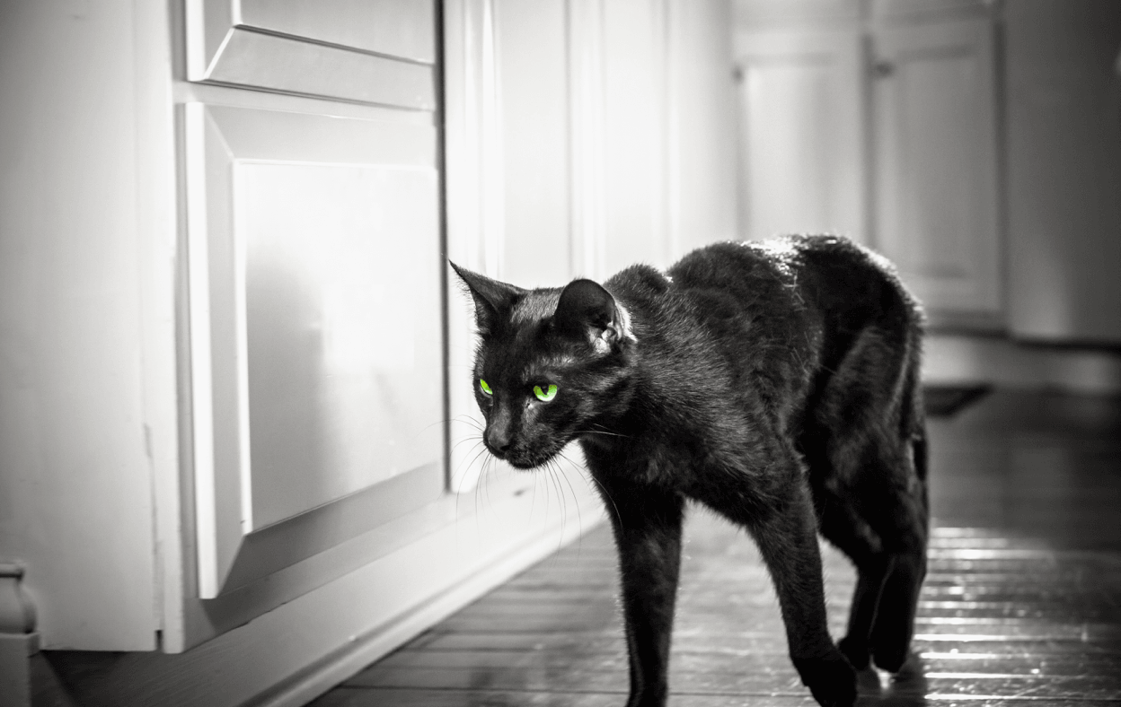 Black cat with piercing green eyes walks past cabinet.