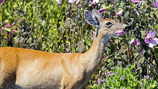 How to keep deer out of the yard and garden tomcat How to keep deer out of garden fishing line