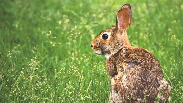 how to keep rabbits out of the yard and garden - How To Keep Rabbits Out Of Garden