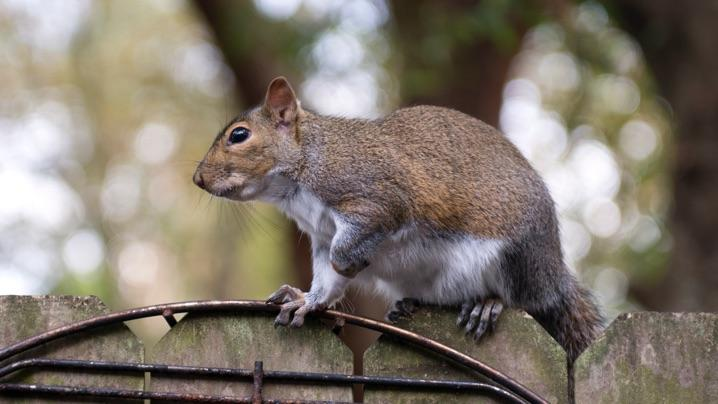 Keep Squirrels Out Of Garden And Yard