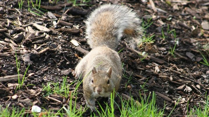 Keep Squirrels Out Of Yard And Garden