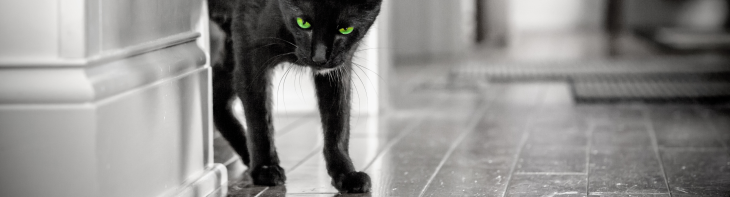 Black Cat with Piercing Green Eyes