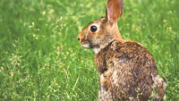 How to Keep Rabbits Out of the Yard and Garden