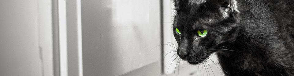 How To Determine If Rodent Infestation In The House - Tomcat