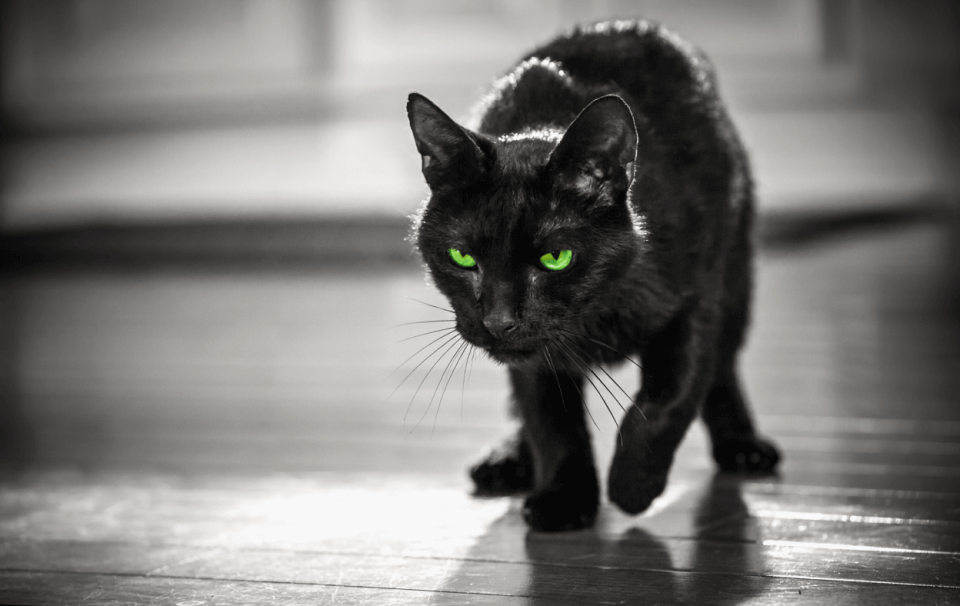 Black cat with glaring green eyes