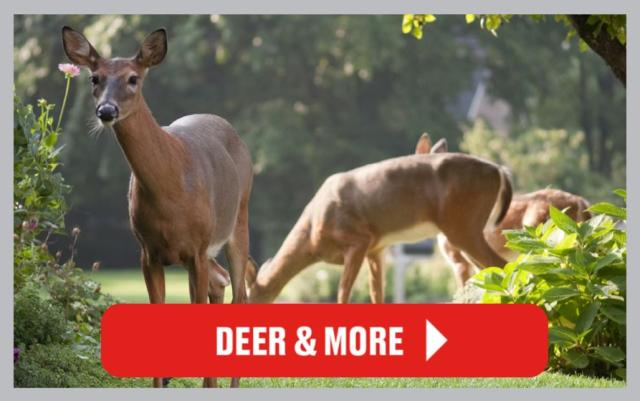 Deer Control Articles