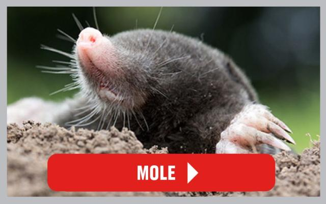 Mole Contro Articles