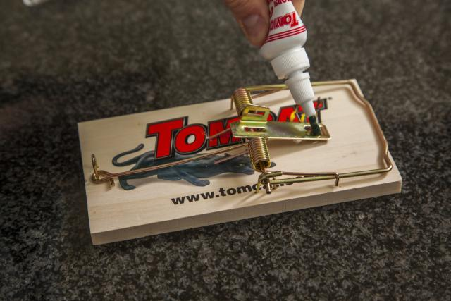 Tomcat Wooden Mouse Trap Setting Glue 2