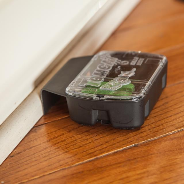 Mouse bait station near baseboard