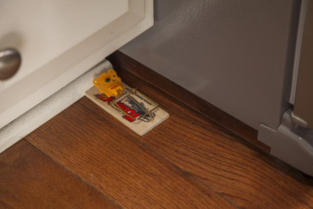 Tomcat Wooden Mouse Traps Placed
